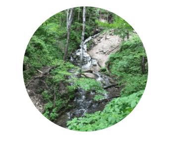 creek cutting through woods
