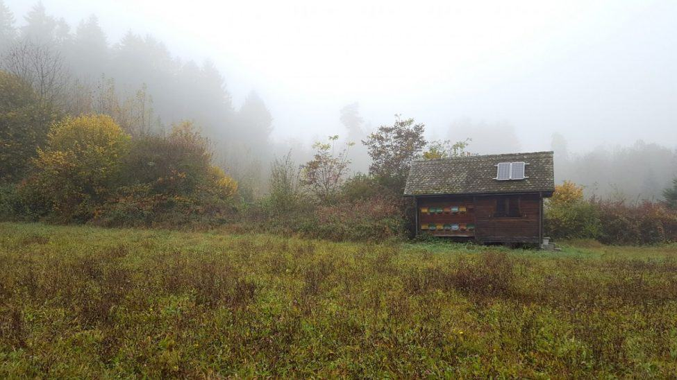 small cabin with solar panel on a foggy morning